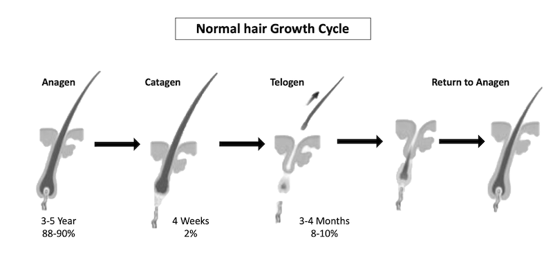 /web-assets/images/ingredients/hair_growth_cycle.png